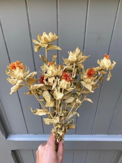 DF carthamus orange 65 cm