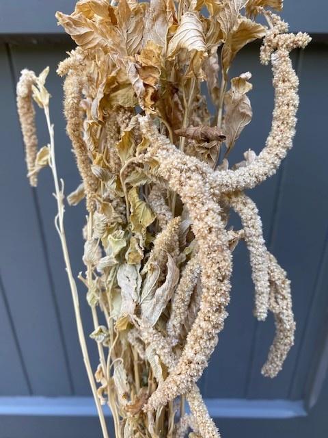 DF Amaranthus Caudatus Green 100 cm per stem