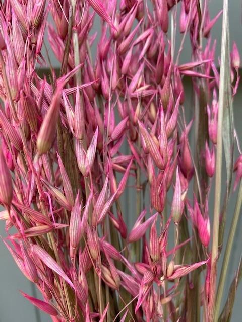 DF oats pink 70 cm