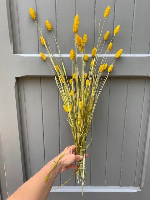 DF phalaris yellow 70cm