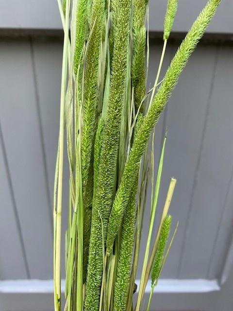 DF Phleum green 70 cm
