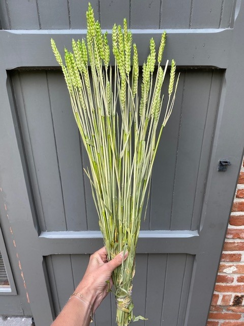 DF wheat green 70 cm
