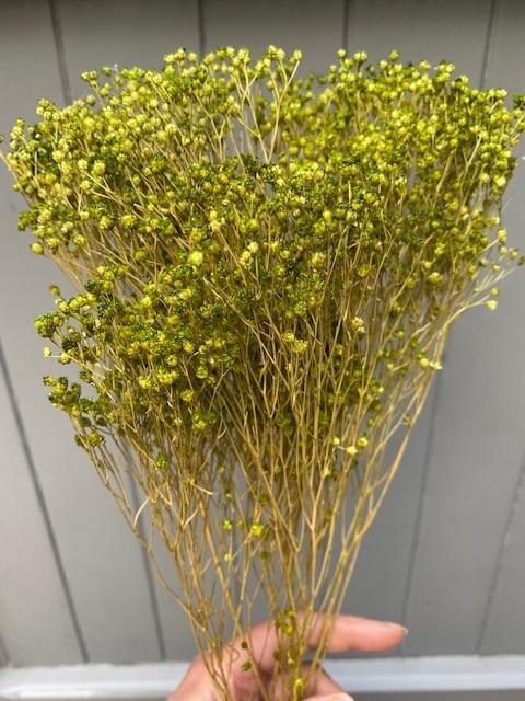 DF Broom Bloom green 50 cm