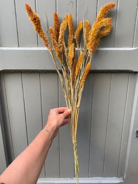 DF setaria orange 65cm