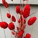 DF Phalaris Red 70 cm