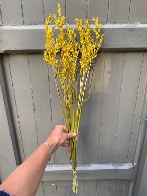 DF oats yellow 70 cm