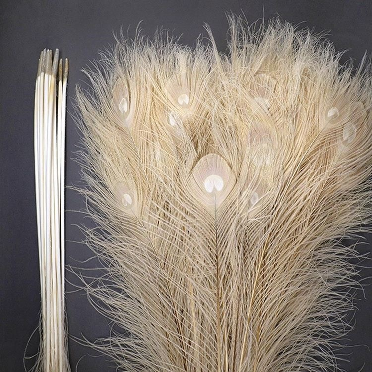 AA feather peacock bleached per piece 65 cm