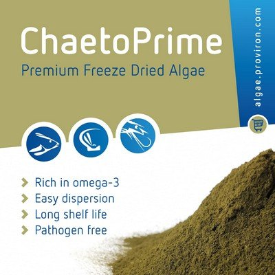 Achieving major breakthrough in ChaetoPrime production!