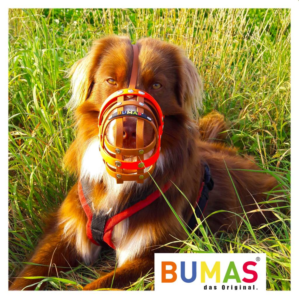 BUMAS - das Original. BUMAS Muzzle for Australian Shepherds made of BioThane®, pink/white