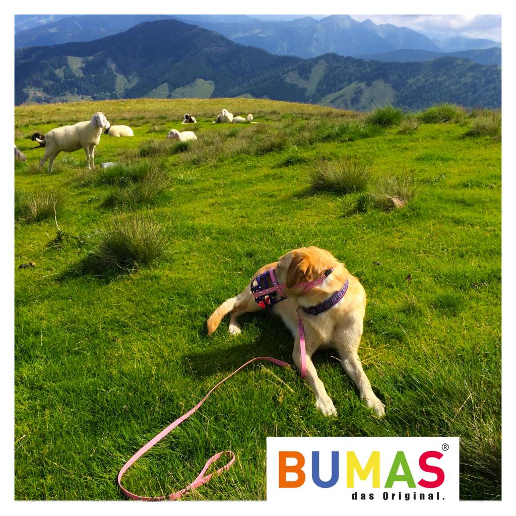 BUMAS - das Original. BUMAS - easy going - leash made of BioThane® in light brown