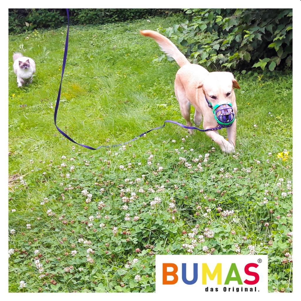 BUMAS - das Original. BUMAS - sport - BioThane® Schleppleine in hellbraun