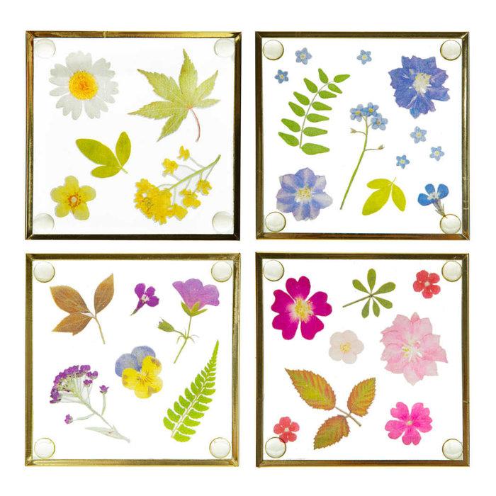 Untersetzer mit gepressten Blumen, 4er Set