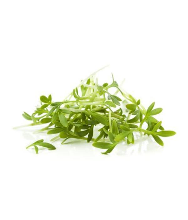 Kresse Samen - Gartenkresse 50g