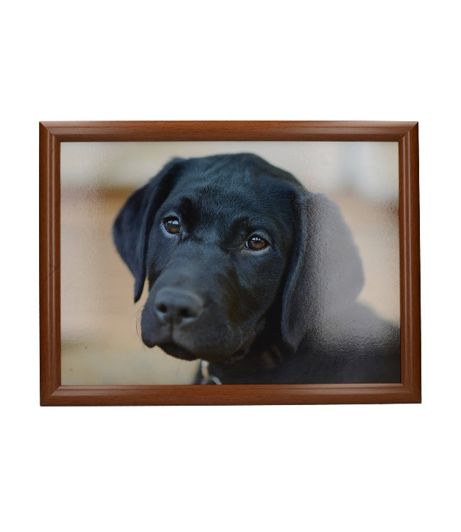 Schootkussen Hond Labrador