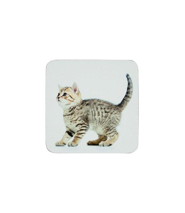 Onderzetters  kitten