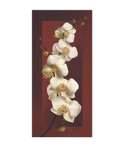 Ingelijste Posters: Witte Orchidee