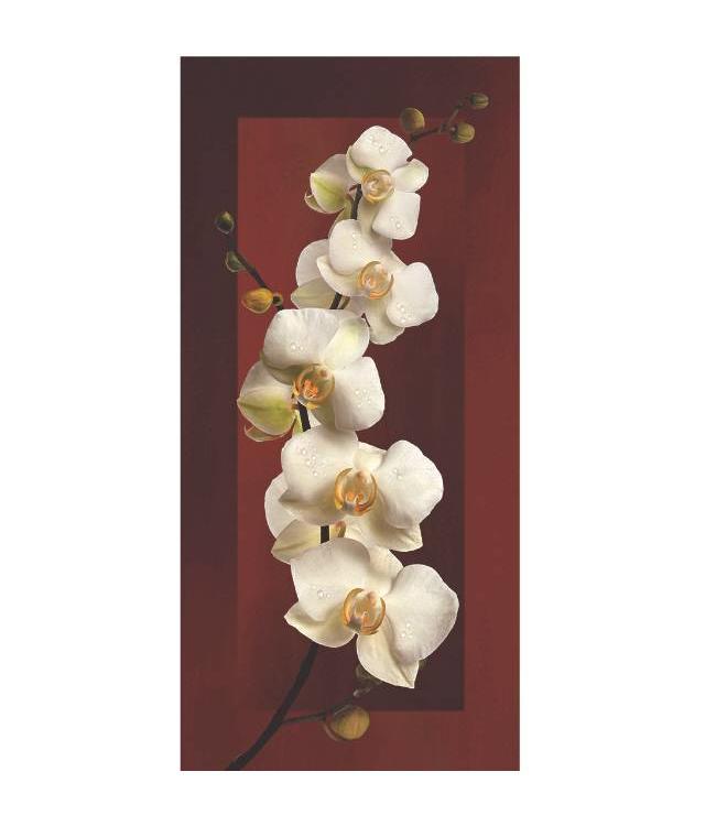 Kunstzinnige Ingelijste Posters: Witte Orchidee