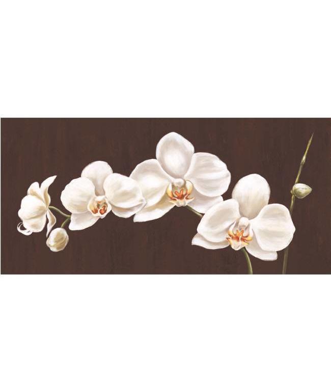 Kunstzinnige Ingelijste Posters: Witte Orchidee op zwarte achtergrond