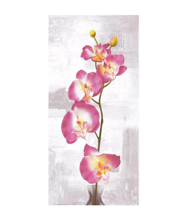 Kunstzinnige Ingelijste Posters: Roze Orchidee