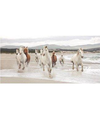 Ingelijste Posters: Paarden op het strand