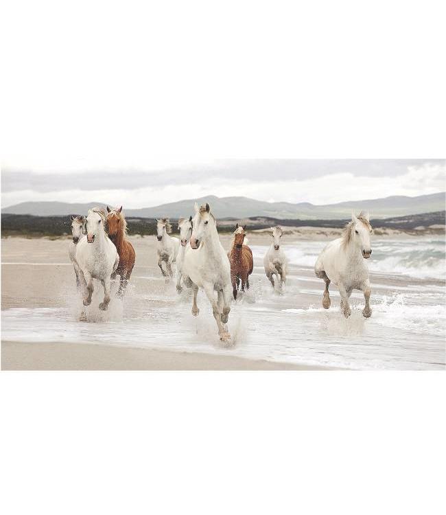 Kunstzinnige Ingelijste Posters: Paarden op het strand