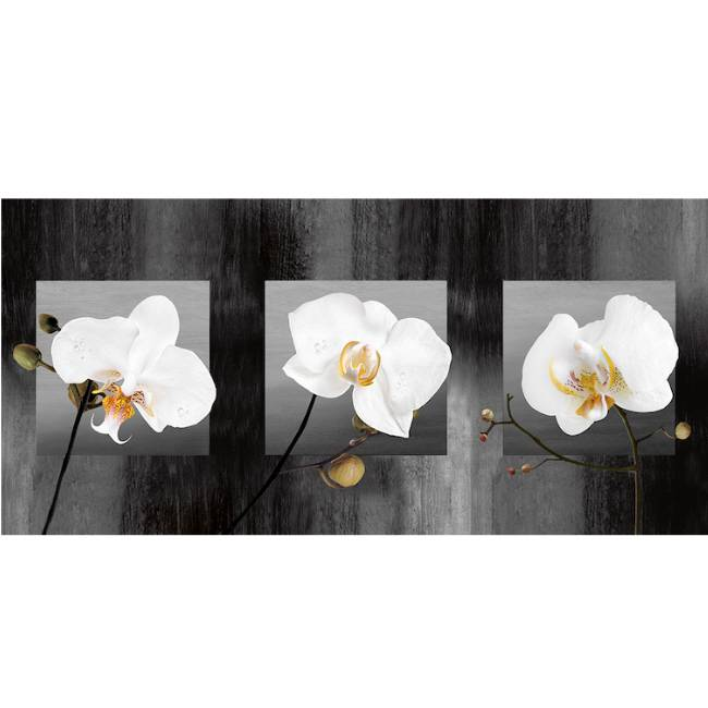 Kunstzinnige Ingelijste Posters: Witte orchideen