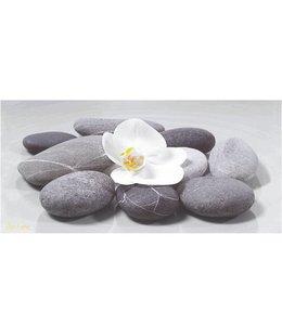 Ingelijste Posters: Witte Orchidee op stenen