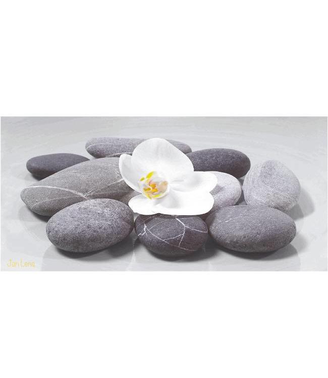 Kunstzinnige Ingelijste Posters: Witte Orchidee op stenen