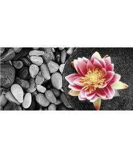 Ingelijste Posters: Zen Waterlelie op stenen