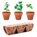 3 terracotta potjes en 3 verschillende kruidenzaden