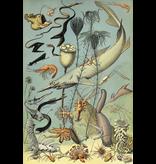 Geïllustreerd notebook Cahier du Naturaliste