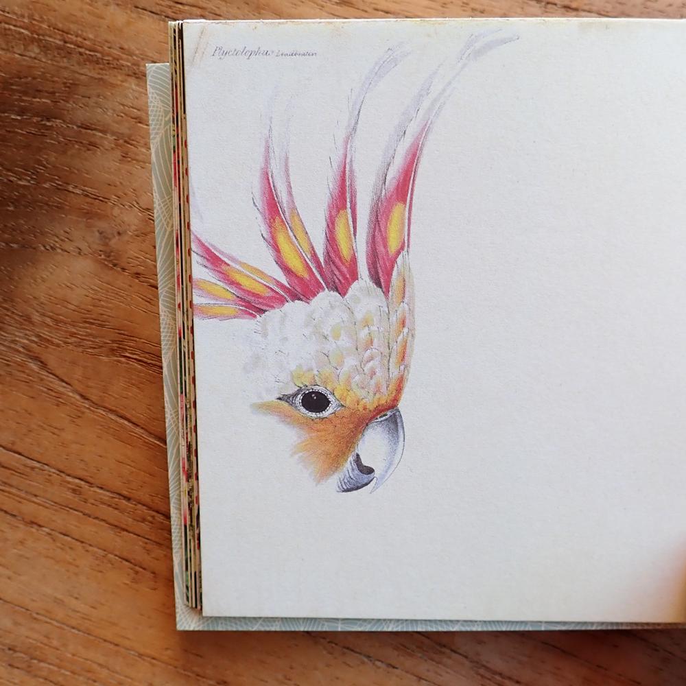 Geïllustreerd petit notebook les Oiseaux