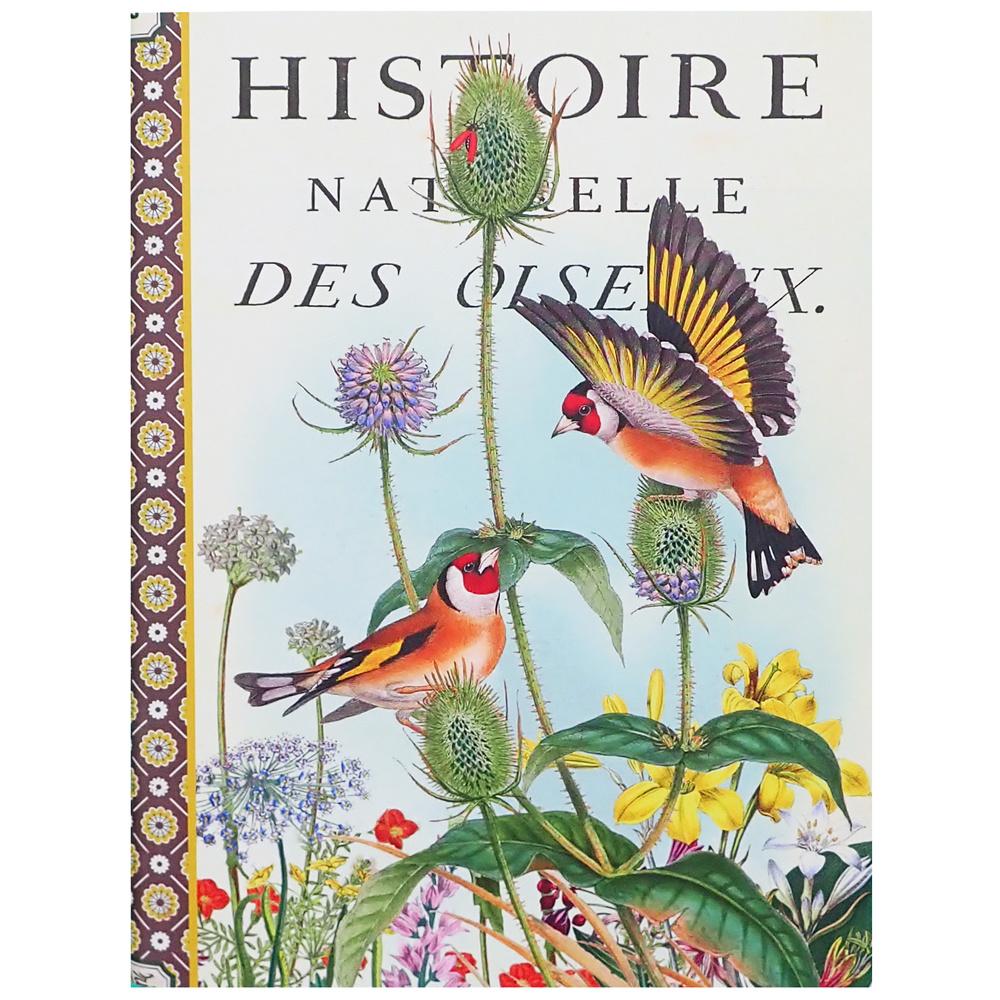 Geïllustreerd notebook Oiseaux d'Europe