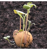 Blossombs mini eierdoosje