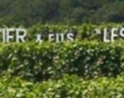 Domaine Robert Groffier