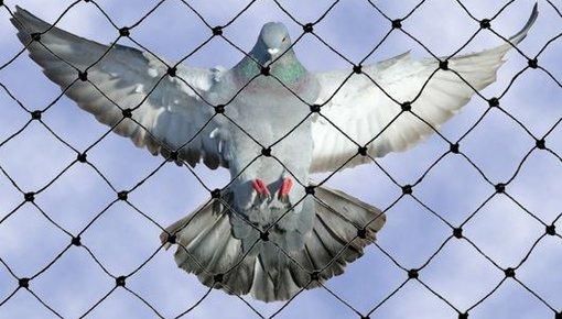 Vogelwerende netten