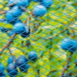 Tuinnet blauw per m2