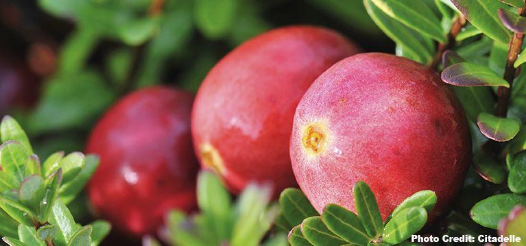 Cranberry's: topkwaliteit uit Canada.