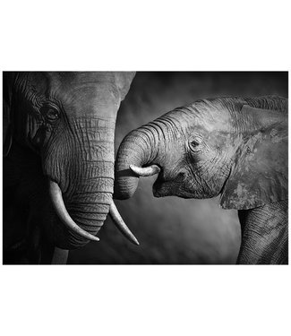 Sweet Living Canvas Schilderij Elephants