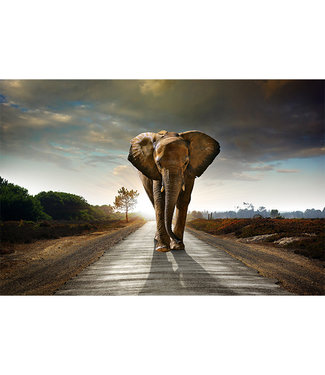 Sweet Living Canvas schilderij Walking Elephant