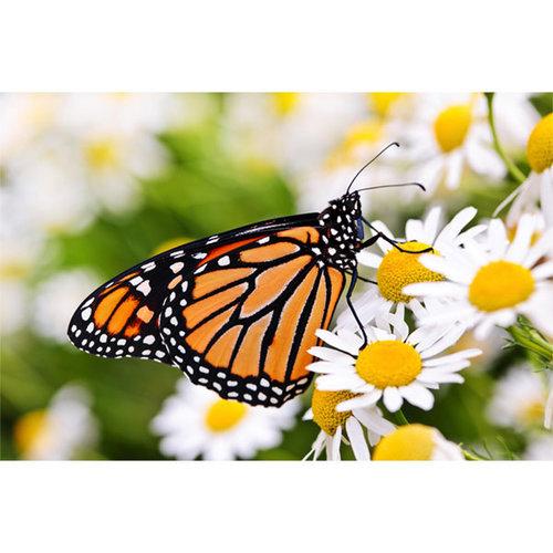 Sweet Living Canvas Schilderij Monarch Butterfly