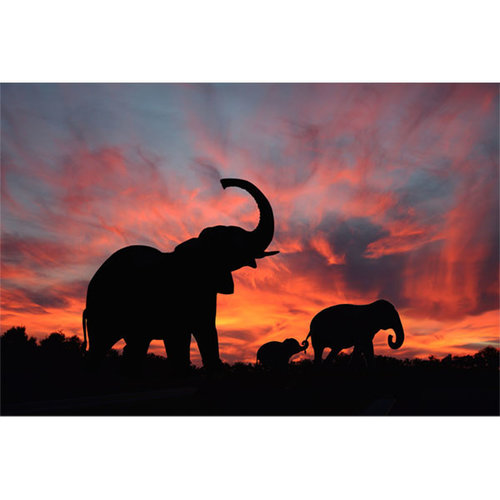 Sweet Living Canvas Schilderij Sunset Elephants