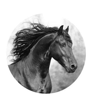 Sweet Living Wandcirkel Fries Paard