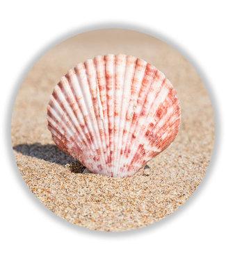 Sweet Living Wandcirkel Seashell