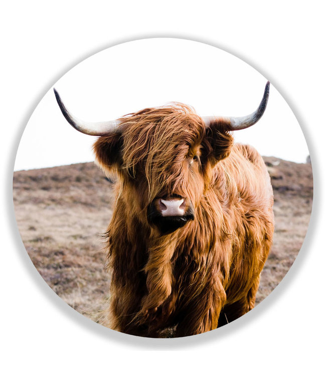 Sweet Living Wandcirkel Highland Cow On Islay