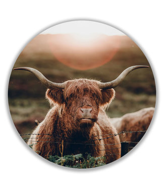 Sweet Living Wandcirkel Highland Cow In The Sun