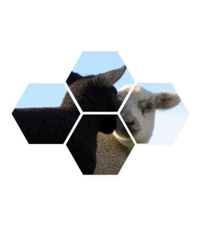 Sweet Living Hexagon Lammetjes - 40xH50 cm