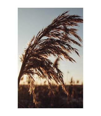 Sweet Living Schilderij Pampas Grass