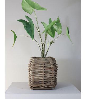 Sweet Living Rotan Plantenmand Myrte - 40x40xH43 cm