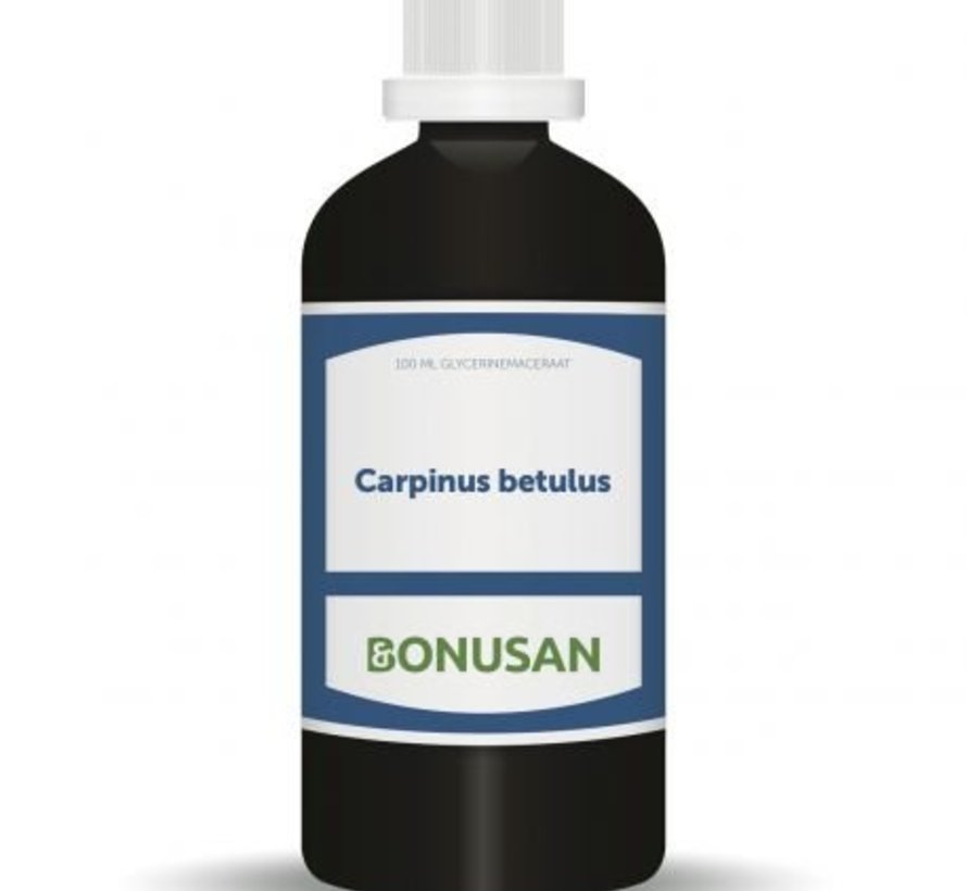 Bonusan Carpinus betulus 100 m